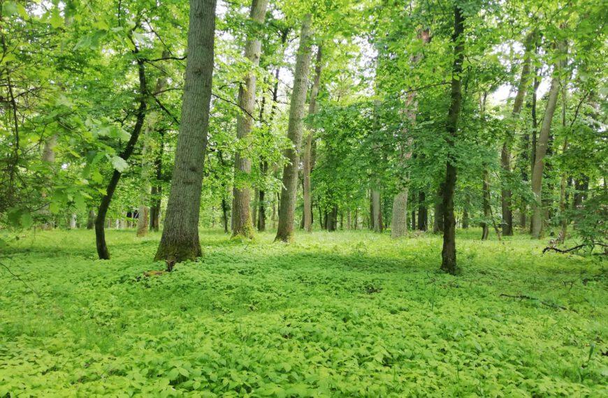 Kraftplatz Wald